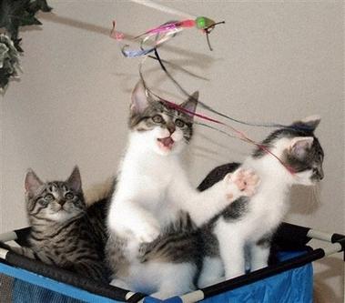 copy_cat_copies.jpg