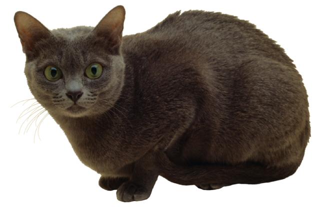 Who-me-cat-797448.jpg